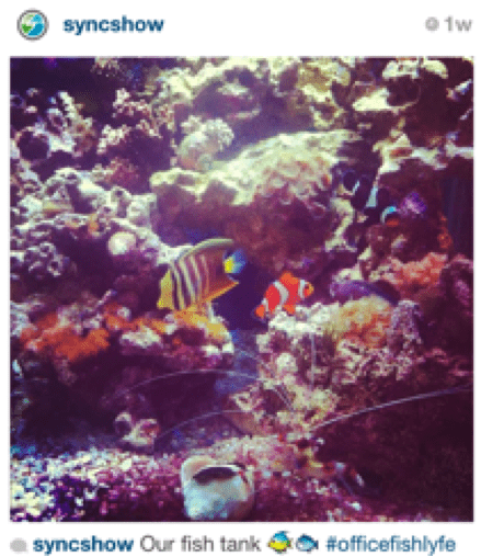 FishtankInstagram resized 600