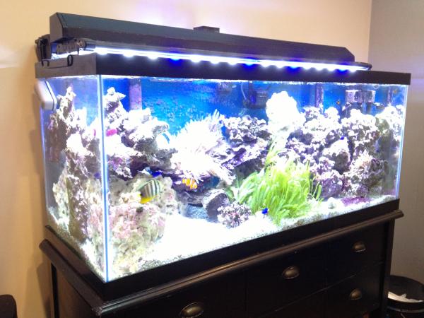 SyncShow Fish Tank
